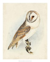 Meyer Barn Owl Fine-Art Print
