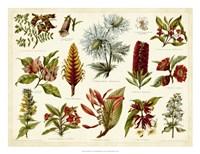 Tropical Botany Chart I Fine-Art Print