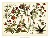 Tropical Botany Chart II Fine-Art Print