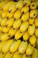 Oman, Dhofar Region, Salalah. Local bananas for Sale Fine-Art Print