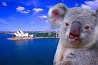 Portrayal of Opera House and Koala, Sydney, Australia Fine-Art Print
