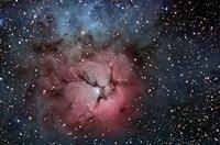 The Trifid Nebula Fine-Art Print
