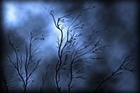 Stormy Skies Fine-Art Print