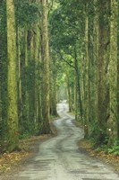 Road through Rainforest, Lamington National Park, Gold Coast Hinterland, Queensland, Australia Fine-Art Print