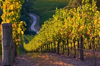 Australia, Adelaide Hills, Summertown vineyard Fine-Art Print