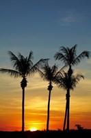 Beach, Palm trees, Mindil Beach, Darwin, Australia Fine-Art Print