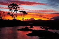Sunset, Gum Tree, Binalong Bay, Bay of Fires, Australia Fine-Art Print