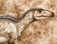 Allosaurus Fine-Art Print