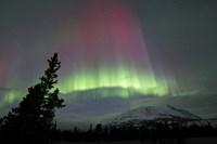 Red and Green Aurora Borealis over Carcross Desert Fine-Art Print