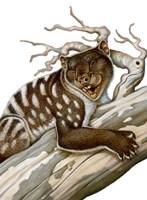 Thylacoleo, a Marsupial Lion from the Pleistocene Age Fine-Art Print
