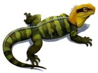 Clevosaurus Fine-Art Print