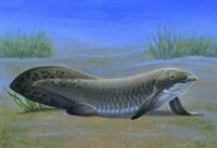 Ceratodus Fine-Art Print