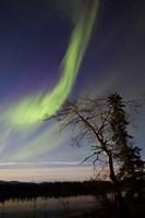 Aurora Borealis over the Yukon River, Whitehorse, Canada Fine-Art Print