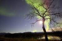 Aurora Borealis with Tree and Pleiades, Yukon, Canada Fine-Art Print
