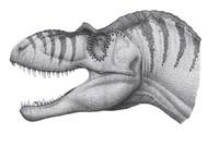 Headshot of an Albertosaurus Sarcophagus Fine-Art Print