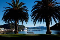 Picton, Marlborough, South Island, New Zealand Fine-Art Print