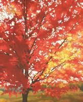 Red Tree Fine-Art Print