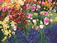 English Tulips Fine-Art Print
