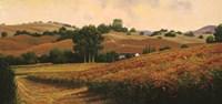 Carneros Vineyards Fine-Art Print