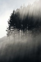 Early Morning Mist and Trees, State Highway 4 near Wanganui, North Island, New Zealand Fine-Art Print