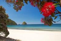 Pohutukawa Tree in Bloom and New Chums Beach, North Island, New Zealand Fine-Art Print
