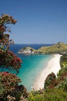 Pohutukawa Tree, Beach, North Island, New Zealand Fine-Art Print