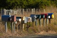 Rural Letterboxes, Otago Peninsula, Dunedin, South Island, New Zealand Fine-Art Print