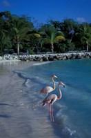 Sonesta Island,  Aruba, Caribbean Fine-Art Print