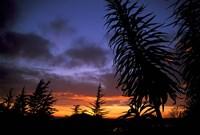 Dunedin, South Island, New Zealand, Trees and sunset Fine-Art Print
