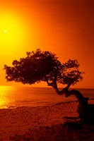 Lone Divi Divi Tree at Sunset, Aruba Fine-Art Print