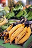 Fresh bananas at the local market in St John's, Antigua Fine-Art Print