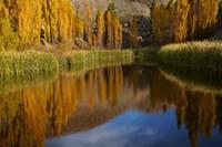 Poplar trees in Autumn, Bannockburn, Cromwell, Central Otago, South Island, New Zealand Fine-Art Print