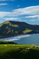 Sheep grazing near Allans Beach, Dunedin, Otago, New Zealand Fine-Art Print