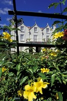 Yellow flowers, St Nicholas Abbey, St Peter Parish, Barbados, Caribbean Fine-Art Print