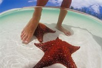 Starfish and Feet, Bahamas, Caribbean Fine-Art Print
