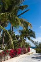 Bahamas, Eleuthera, Harbor Island, Dunmore, Flora Fine-Art Print
