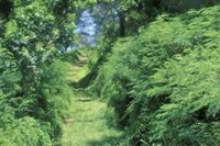 View of Path Through Trees, Bermuda, Caribbean Fine-Art Print
