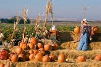 Scarecrows, Fruitland, Idaho Fine-Art Print