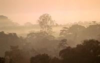 Mist over Canopy, Amazon, Ecuador Fine-Art Print