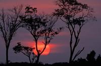 Amazonia Sunset Fine-Art Print