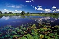 Waterways in Pantanal, Brazil Fine-Art Print