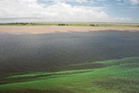 Brazil, Amazon River, Santarem Meeting of the Waters Algae bloom Fine-Art Print