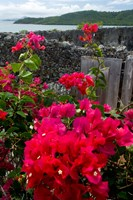 Flowering Bougainvillea & Ruins, Chateau Dubuc, Martinique, French Antilles, West Indies Fine-Art Print