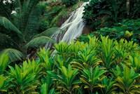 Shaw Park Gardens, Jamaica, Caribbean Fine-Art Print