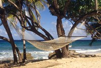 Hammock tied between trees, North Shore beach, St Croix, US Virgin Islands Fine-Art Print