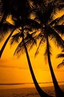 Sunset and Palms, San Juan, Puerto Rico Fine-Art Print