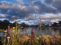Wildflowers, Jasper National Park, Alberta, Canada Fine-Art Print