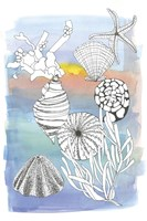 Sea Shell II Fine-Art Print