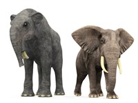 An adult Deinotherium compared to a modern adult African Elephant Fine-Art Print