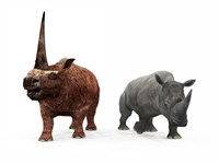 An adult Elasmotherium compared to a modern adult White Rhinoceros Fine-Art Print